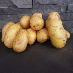Pommes de terre Amandine 1kg