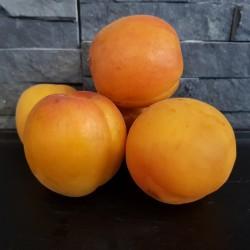 Abricots 1kg
