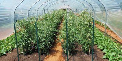 Fruits et légumes en biodynamie chez Matthieu, notre producteur en Aveyron